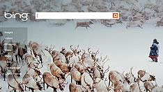 Bing keeps coming on strong : will it continue to?